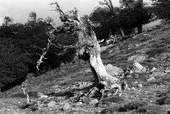 Korsika-1991_03.jpg